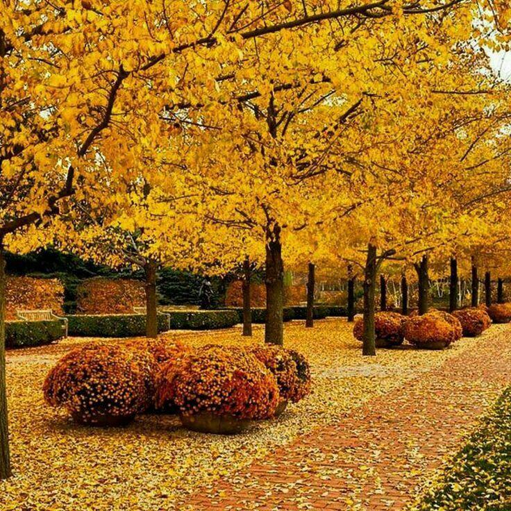 1636 best Autumn images on Pinterest Fall Landscapes and Autumn fall