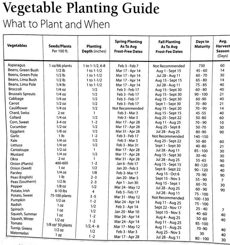 Fall Vegetable Gardening Guide For Texas: 22 Best Gardening & Landscaping In Austin