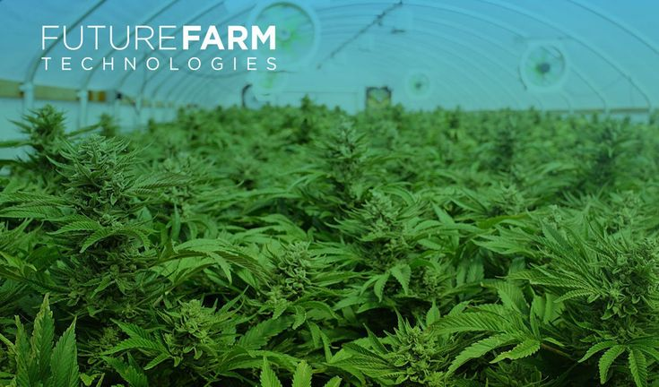 @FutureFarm Tech Partner with @TCG Investments, LLC in Puerto Rico @tallgreenz #cannabis #business #startups  ||  Future Farm Technologies Inc.(CSE: FFT) (OTCQB: FFRMF) and TCG Investments, LLC. announced a new joint venture between the two parties. TCG Investments, LLC, headquartered in San Juan, Puerto Rico, are the owners of Clinica Verde, a brand of medical cannabis dispensaries. All Clinica Verde dispensaries have…