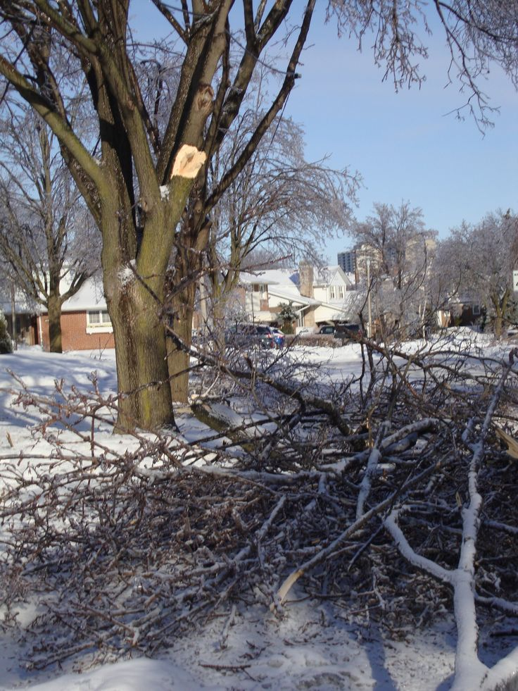 Damage from ice storm 2013