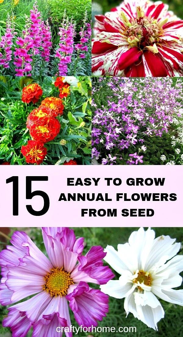 15 Easy To Grow Annual Flowers From Seed Annual Flowers Flower