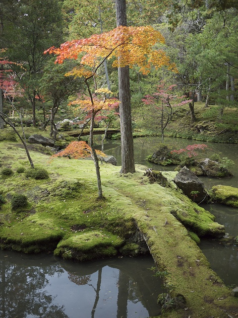 Moss Temple (Kokedera) maybe a good place for a long walk.