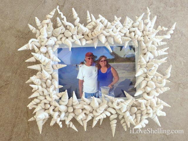 seashell-frame-shells.jpg (640×480)