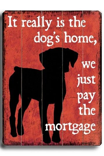 it's really the dog's home #dogquotes