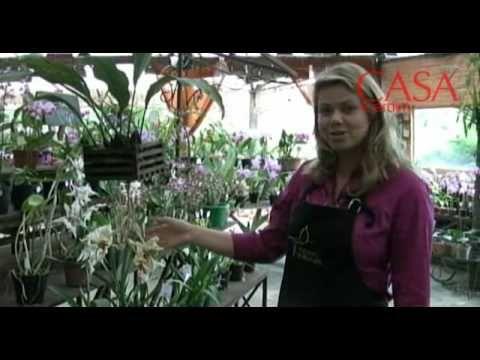 Aprenda como cultivar a sua própria orquídea! - YouTube
