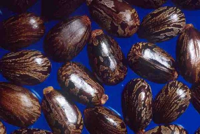 Jamaican Black Castor Oil Benefits: a Miracle for Hair and Skin