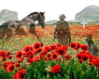 Armistice Day - the eleventh hour of the eleventh day of the eleventh month of 1918. Lest we forget. Remembering all the horses who have given their lives in times of war.