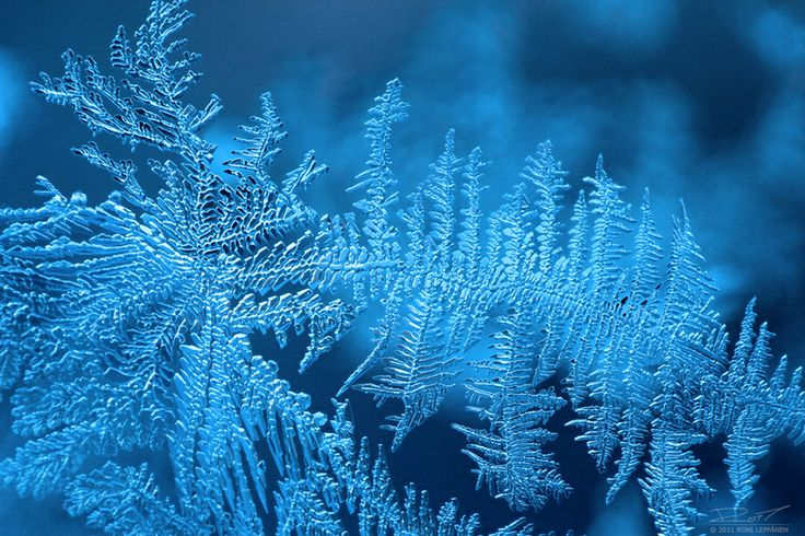 Ice Crystals by Roni Leppänen on 500px
