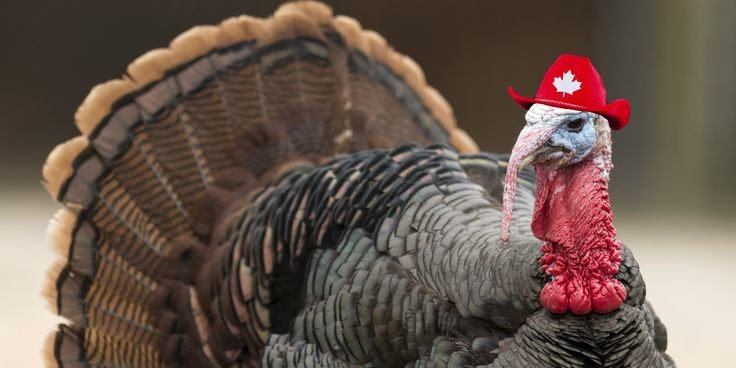 WATCH: 4 Surprising Facts About Canadian Thanksgiving