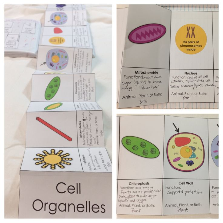 17 best images about cell notes and worksheets on pinterest study guides cell structure and. Black Bedroom Furniture Sets. Home Design Ideas