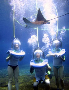 You can get a close up to some of the more unusual sea creatures at Sea World's aquarium - next time ...