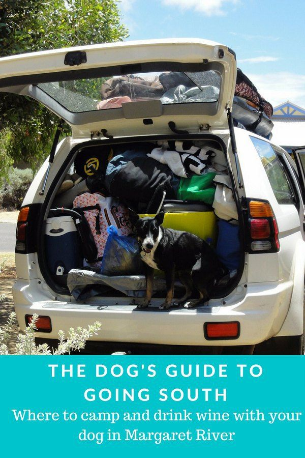 The dog's guide to going south #campingwithdogs