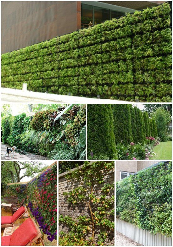15 Living Privacy Fences | These fences are a nice way to create peaceful, green, privacy.