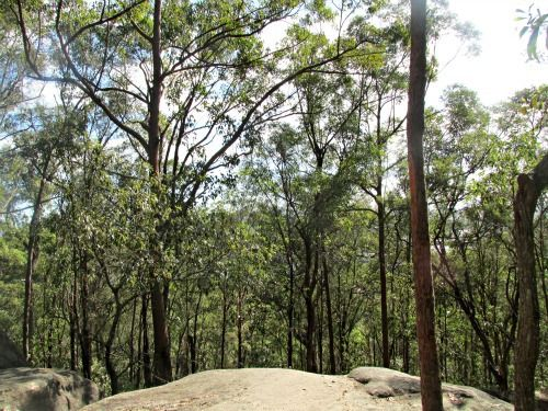 Explore one of the best bushland areas Brisbane has to offer - walk the Sandstone Circuit.