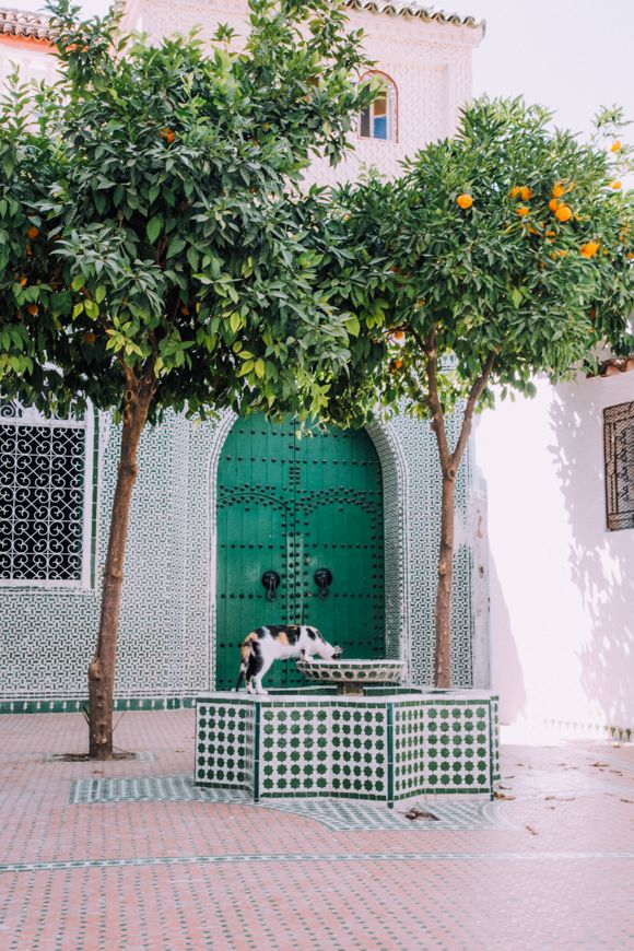 Morocco in Color | Free People Blog #freepeople