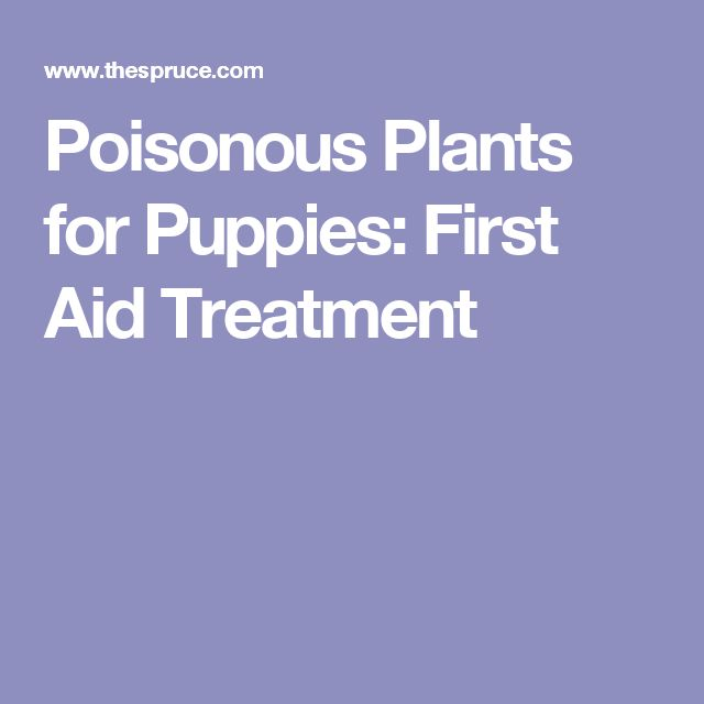 Poisonous Plants for Puppies: First Aid Treatment