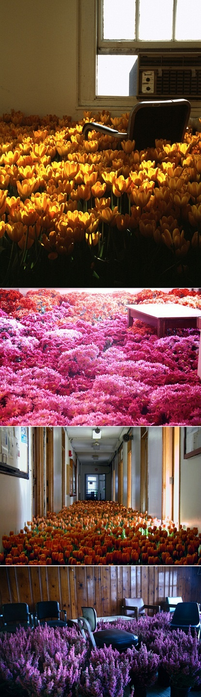 Bloom by Anna Schuleit (2003). After a psychiatric facility was marked for demolition, Schuleit installed nearly 28,000 potted flowers throughout the building as a symbol for reflection and remembrance of the patients and employees that walked through the building in its 90 years of operation.