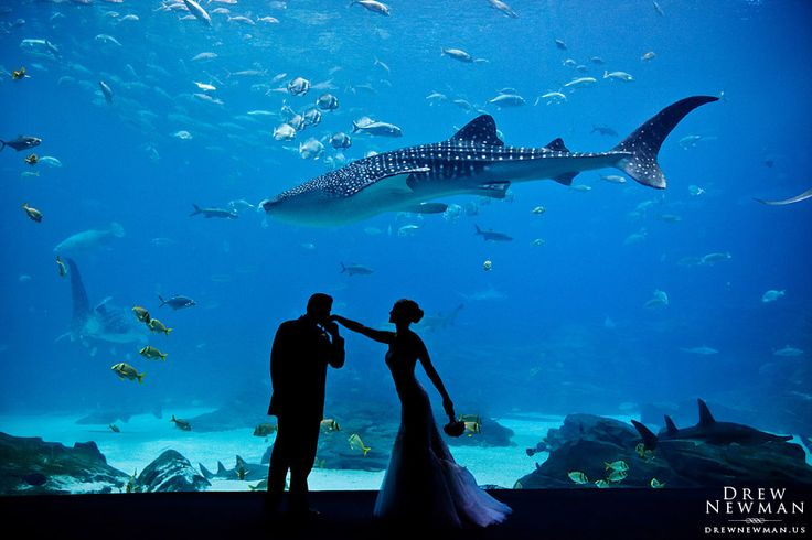 georgia aquarium wedding - Google Search