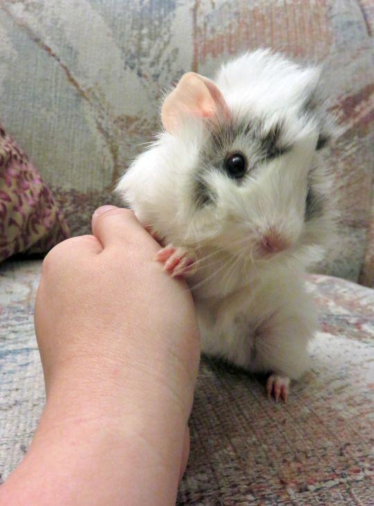 Adorable baby piggie!