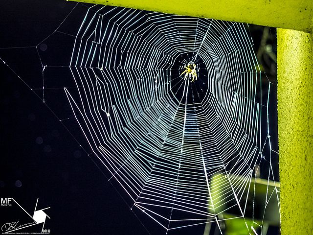 Spiders-Web | by Munns Foto