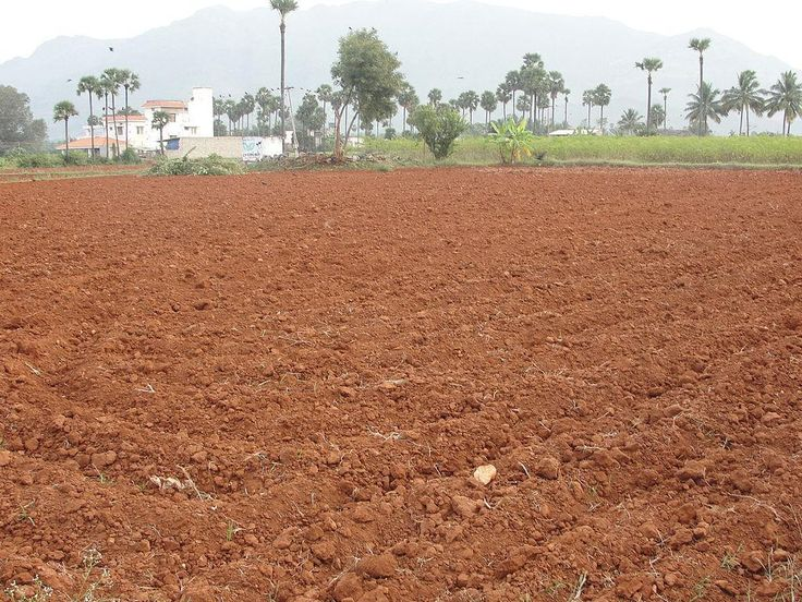 This a picture of one of india's natural resources, soil. A bunch of india's natural resources include soil, mineral, livestock and many more. The soil resource is common because India has tons of fertile land, so soil is easy to find. It grows many things like wheat, rice, sugarcane and other things that they can easily use and sell. The mineral resource is also common because India has lots of minerals including iron, steel, coal, mineral oil, copper and so on.
