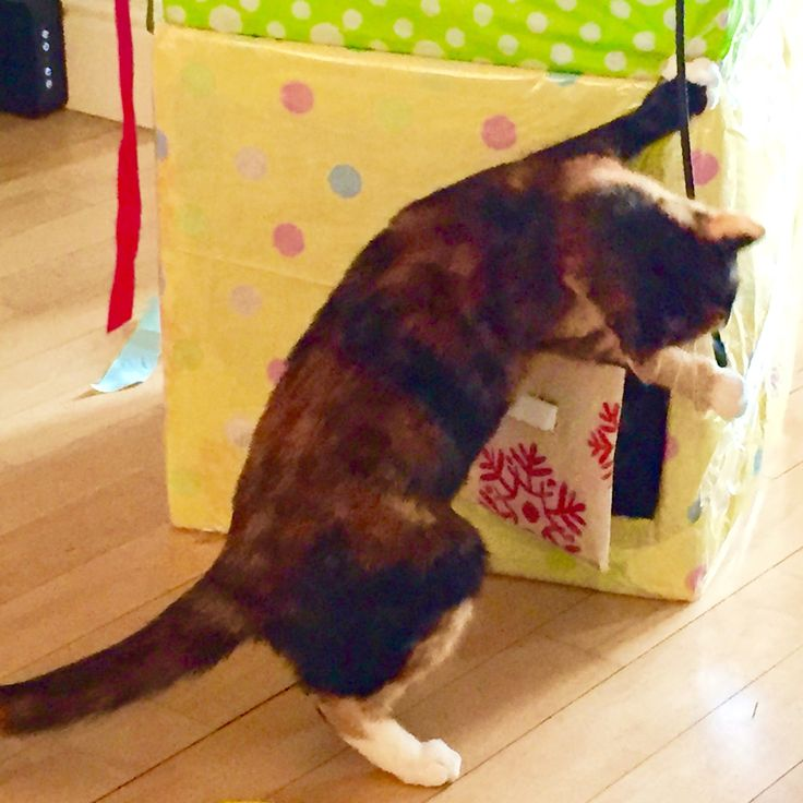 Chilli the cut cat unwraps a present.   She's the inspiration behind a #birthday #card available at  Thortful