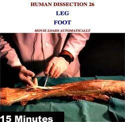 CADAVER DISSECTION VIDEOS leg and foot
