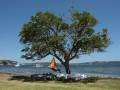 Cacoon: la tenda-amaca che si appende sullalbero o in salotto