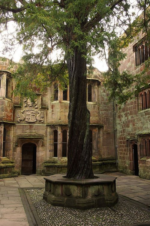 By Blue Pelican - Skipton Castle - Conduit Courtyard (2). The yew tree you see here was planted in 1659.