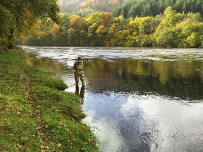 Salmon Fishing Scotland Tay, Perthshire, Scotland Salmon Fishing Report for week ending 31st October 2014.