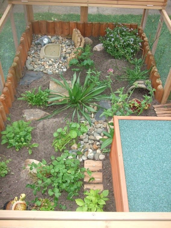 best 20 tortoise enclosure ideas on pinterest outdoor. Black Bedroom Furniture Sets. Home Design Ideas