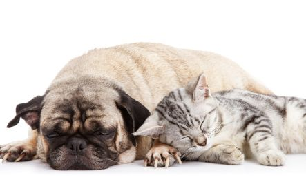 10 Warning Signs of Diabetes in Dogs & Cats -Nicolas, selected from petMDAugust 4, 2013