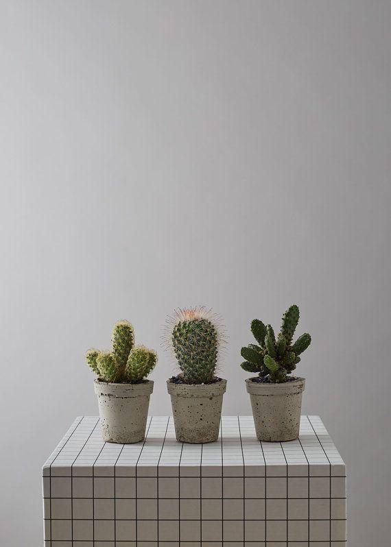 Concrete Mini Cactus Pot by geofleur on Etsy