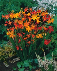 Shade Garden Ideas Zone Mixture Mature Height Inches With