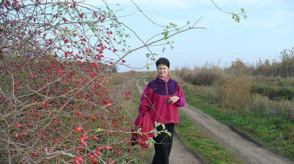 Fructele acestui arbust popular sunt apreciate de sute de ani, pe tot mapamondul, pentru efectele lor terapeutice remarcabile. In China erau indicate in tr
