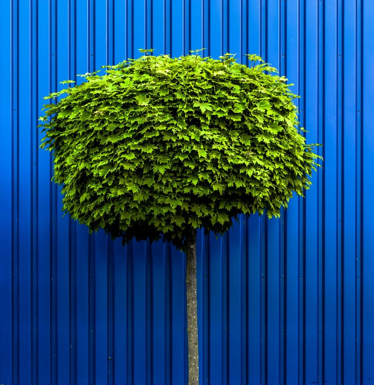 Blue and Green by Ess_Key on 500px