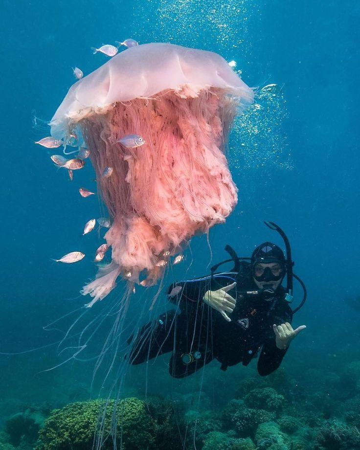 делает кунилингус смешные картинки про медуз и водолазов представляла единый вокал