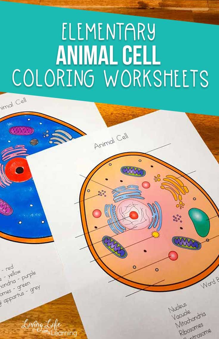 Animal Cell Coloring Worksheet   Cells worksheet [ 1135 x 735 Pixel ]