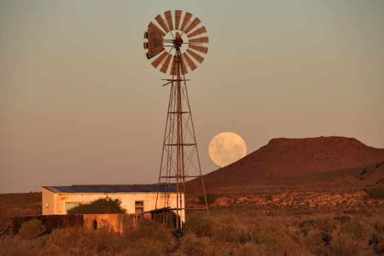 landscape with windmill and wild animals south africa - Google Search