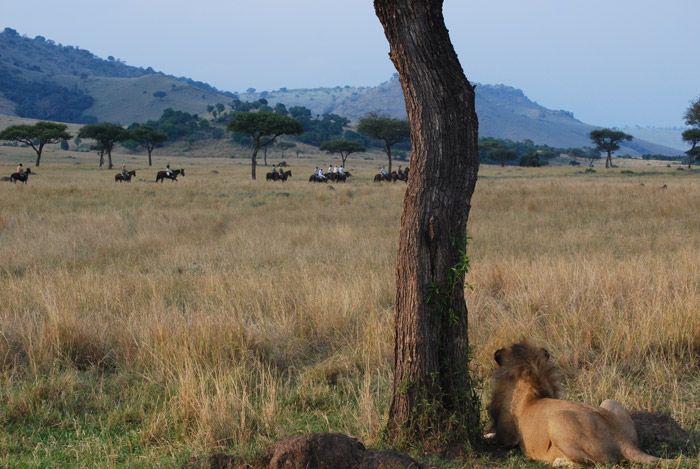 horse riding safari (scheduled via http://www.tailwindapp.com?utm_source=pinterest&utm_medium=twpin&utm_content=post5492340&utm_campaign=scheduler_attribution)