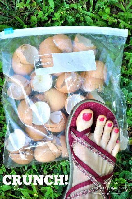 Gardez vos coquilles d'oeufs pour lutter contre les limaces et les escargots.