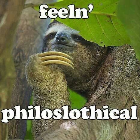Sloth @Monimoneymonkeymanarchymahem Loplollipoplullaby @Julie Forrest Rosario