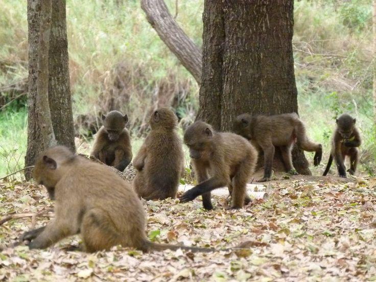 Riverside wildlife centre   #southafrica #volunteer #travel #animals