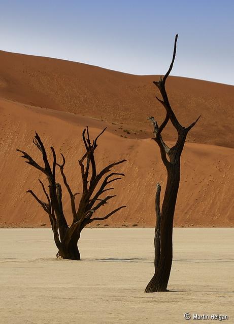 Dead Vlei Camel Thorn Trees by Martin_Heigan, via Flickr
