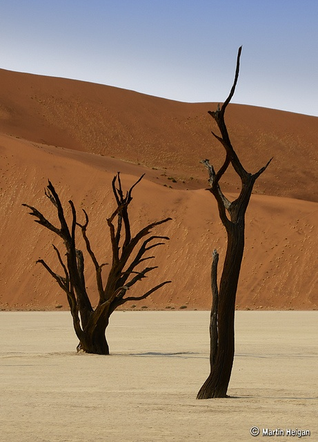 Dead Vlei Camel Thorn Trees by Martin_Heigan, via Flickr