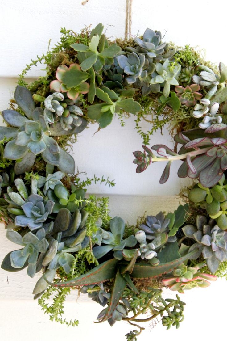Learn how to make this lush succulent wreath with cuttings from larger plants.