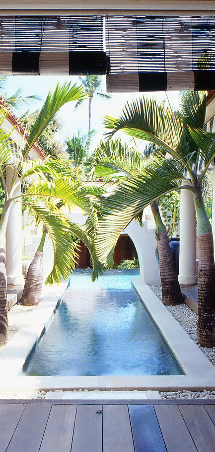 Palms and lap pool.