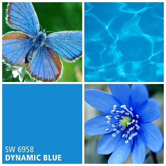 17 best images about brilliant blues blue paint colors for Best peacock blue paint color