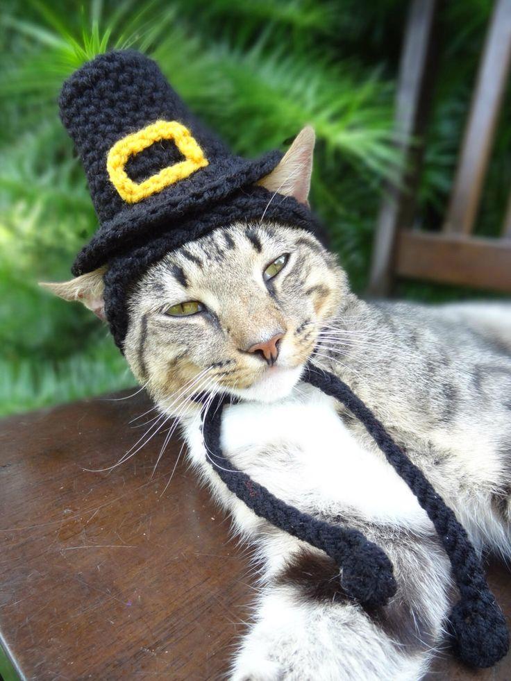 Pilgrim Cat Hat - Pilgrim Cat Dog Costume -  The Pilgrim's Cat Hat - Quaker Hat for Cats and Small Dogs - Thanksgiving Costume Pets by iheartneedlework on Etsy https://www.etsy.com/listing/158131487/pilgrim-cat-hat-pilgrim-cat-dog-costume