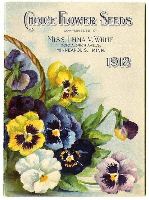 "On the 1913 front cover of Emma V. White's catalog, there is an overflowing basket of Giant Prize Pansies. Emma V. White called herself the ""North Star Seedswoman"" and had her first mailing in 1896. She produced catalogs with colorful, hand painted covers aimed at woman customers."
